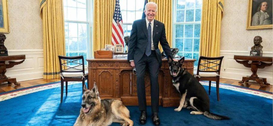 """Les chiens des Bidens sont renvoyés dans le Delaware après un """"comportement agressif""""."""