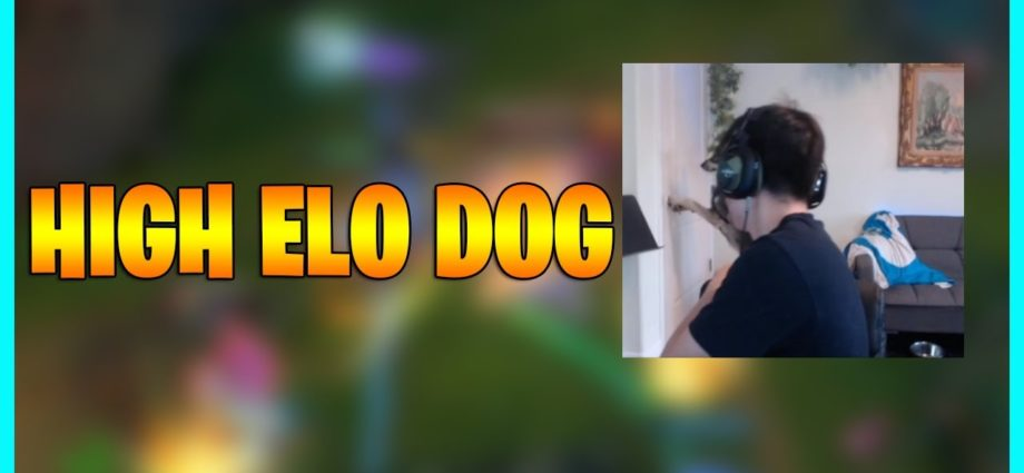 100% High Elo Dog...LoL Daily Moments Ep 1407