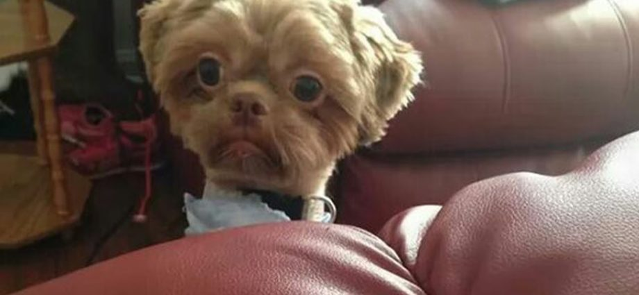 Oubliez le stress et riez comme des fous ! Les vidéos de chiens les plus drôles !🐕🐕🐕🐕🐕