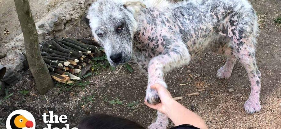 Un sympathique chien errant refuse d'être secouru sans son meilleur ami   The Dodo