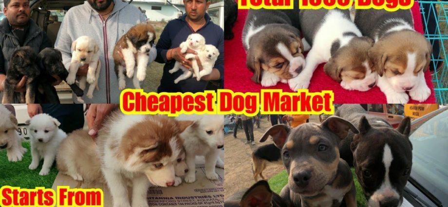 Marché de chiens le moins cher à l'extérieur de l'exposition de chiens Nawanshahar Punjab 2021