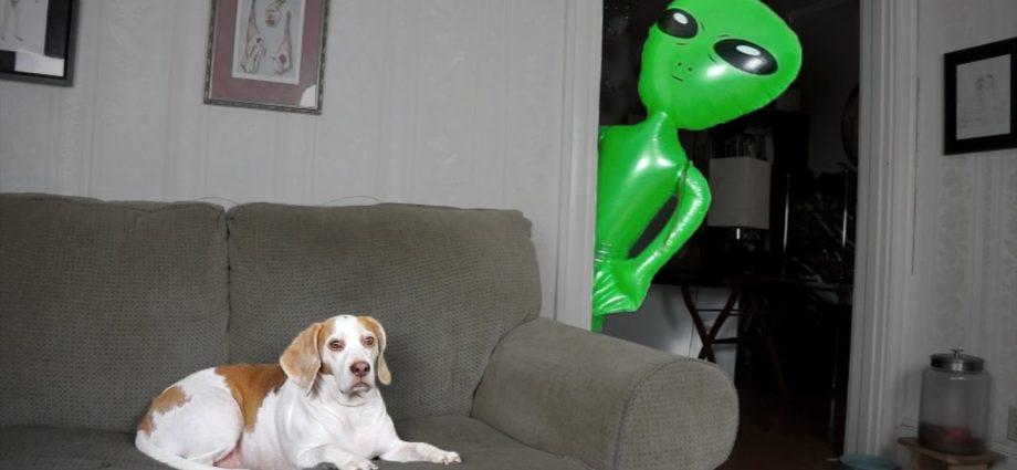 Un chien victime d'un extraterrestre : Maymotiv amusant pour un chien