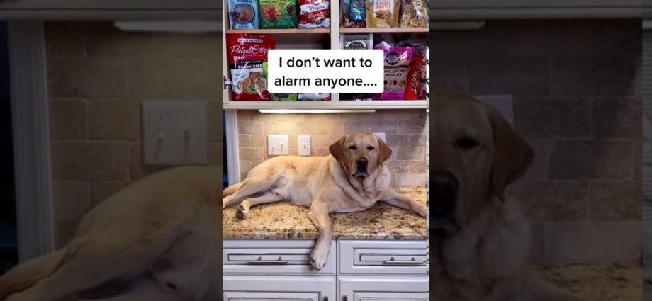 Que quelqu'un apporte à ce chien un snack !