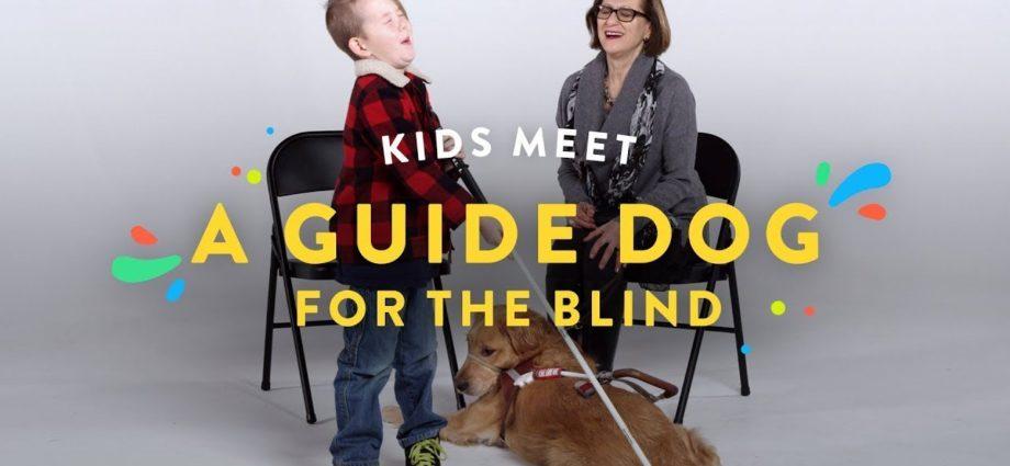 Les enfants rencontrent un chien guide pour aveugles | Kids Meet | HiHo