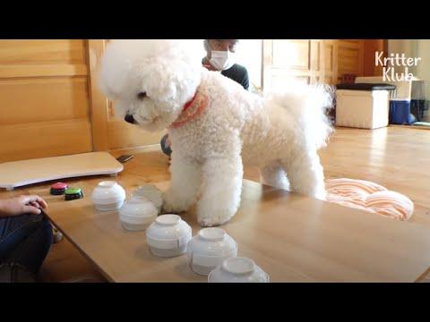 Ce que ce chien a fait juste après avoir éliminé le jeu de coquillages est ? (Partie 1)   Kritter Klub