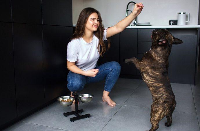 Faites-vous ces 7 erreurs fréquentes de dressage de chiens?