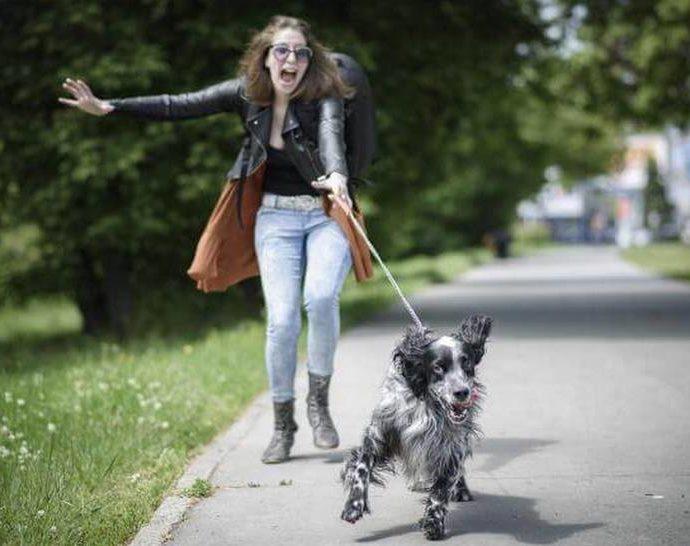 Comment apprendre à un chien à marcher en laisse: trucs et astuces