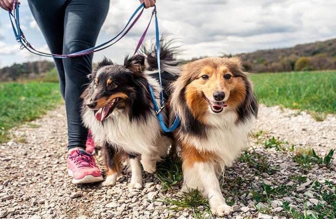 Comment dresser un chien en laisse? - Conseils de dressage pour chiens
