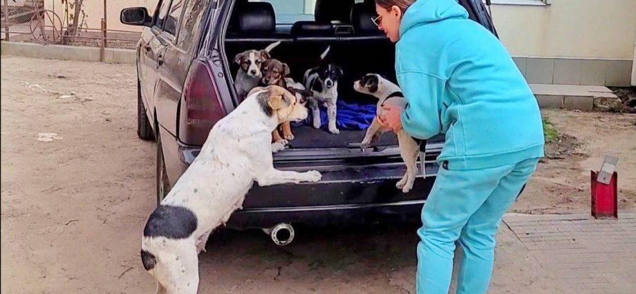 Une maman chien retrouve ses chiots volés... Elle pleure de bonheur