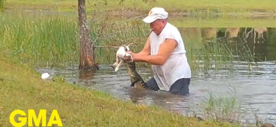 Un homme saute dans l'eau et sauve un chien d'un alligator l GMA