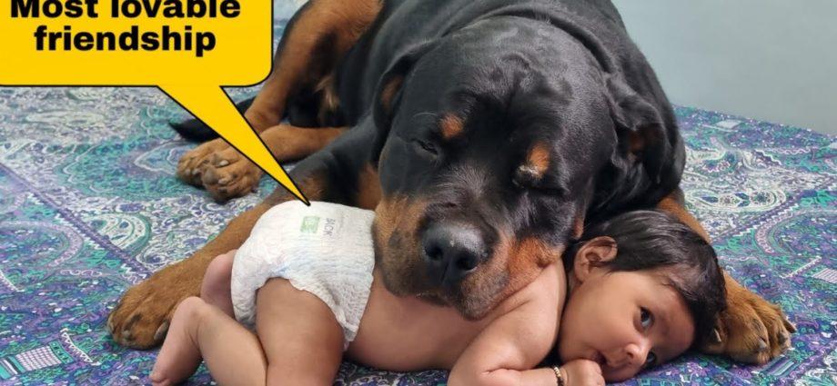 Amitié amusante entre mon chien et mon BABY||Vidéos drôles de chiens.