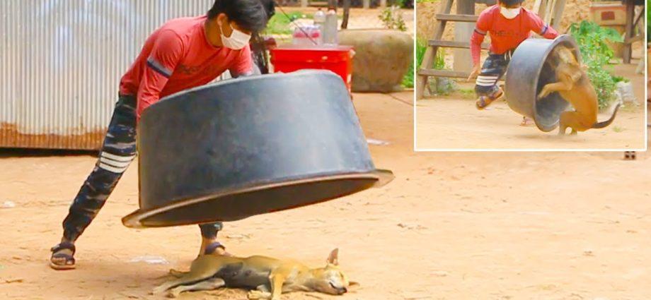 Wow ! !! Une super grosse boîte de plastique contre un chien endormi - Vidéos les plus drôles