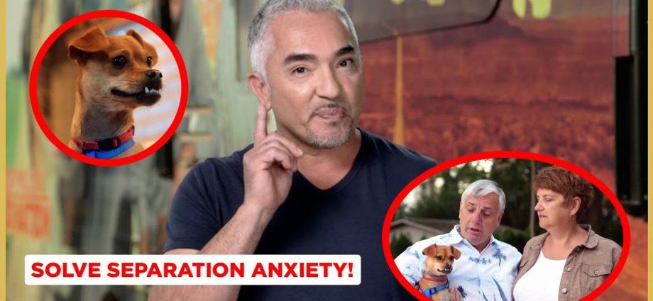 Comment résoudre l'anxiété de séparation ! (courts métrages de Dog Nation)