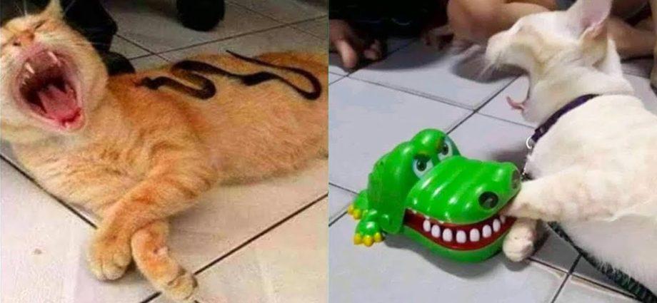 Les meilleures vidéos drôles de chats qui vous feront rire toute la journée 😂😹.