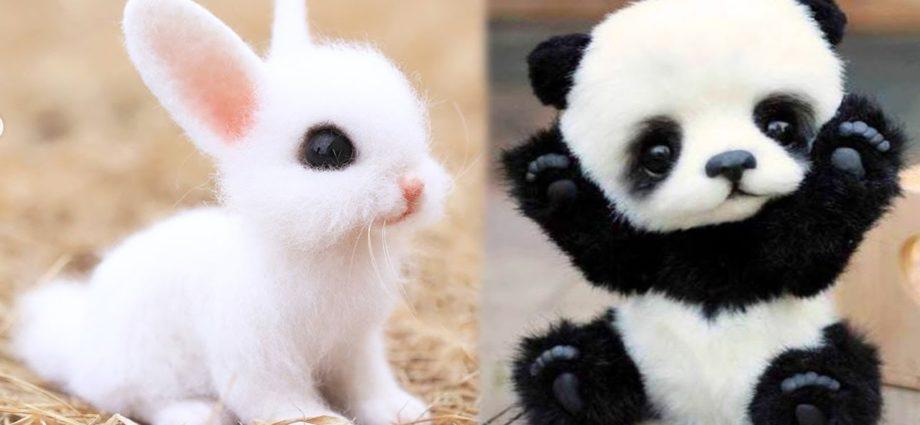 AWW Animaux TELLEMENT Mignons ! Bébés animaux mignons Vidéos Compilation moment mignon des animaux #7