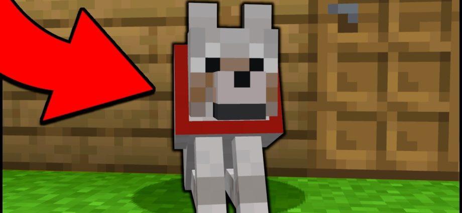 Un chien de garde dans Minecraft ! [easy]