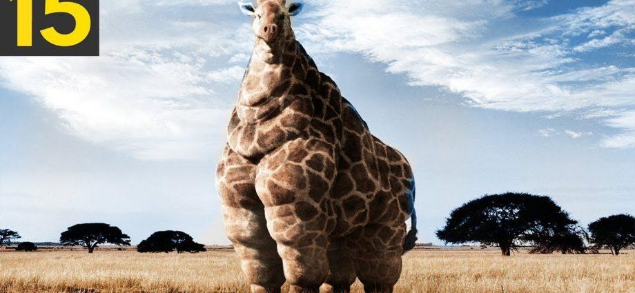 15 des plus gros animaux jamais vus