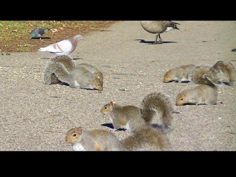 Écureuils pour chats et chiens à regarder, vidéo HD de 3 heures pour chats et chiens !