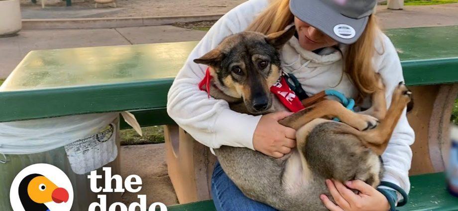Un chien a toujours caché sa queue entre ses jambes jusqu'à ce que... | Journée d'adoption du Dodo