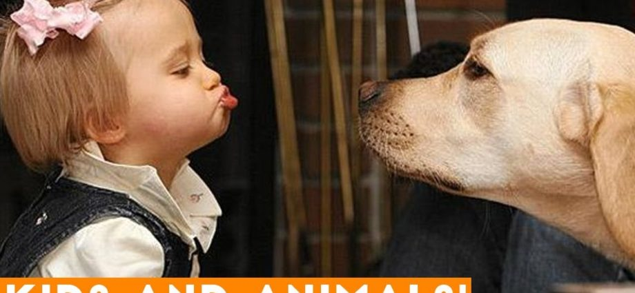 Compilation ultime des plus drôles enfants et animaux de compagnie de 2018   Vidéos drôles d'animaux de compagnie