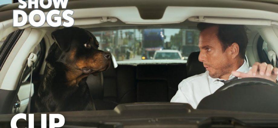 "Show Dogs | Clip ""Ma musique"" | Global Road Entertainment"