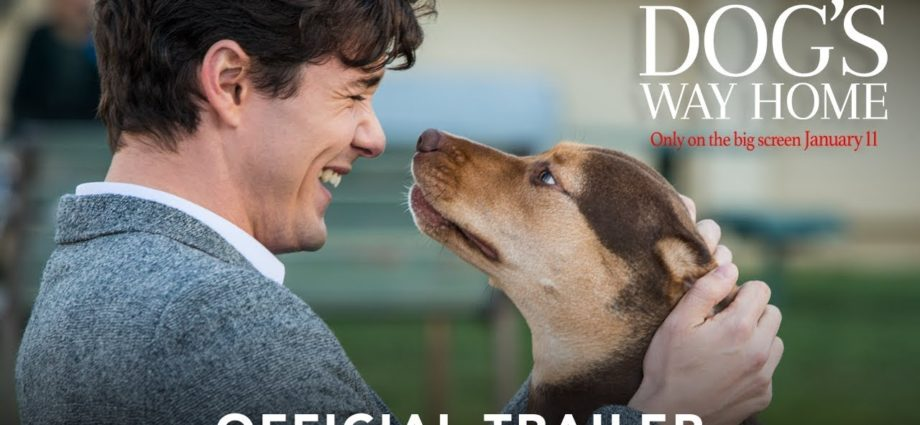 A DOG'S WAY HOME - Bande-annonce officielle (HD)