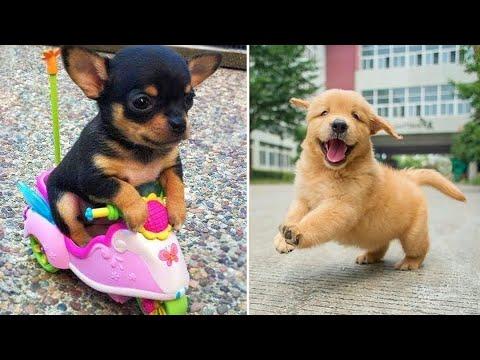 Bébés animaux 🔴 Compilation de vidéos drôles de chats et de chiens (2020) Perros y Gatos Recopilación #21