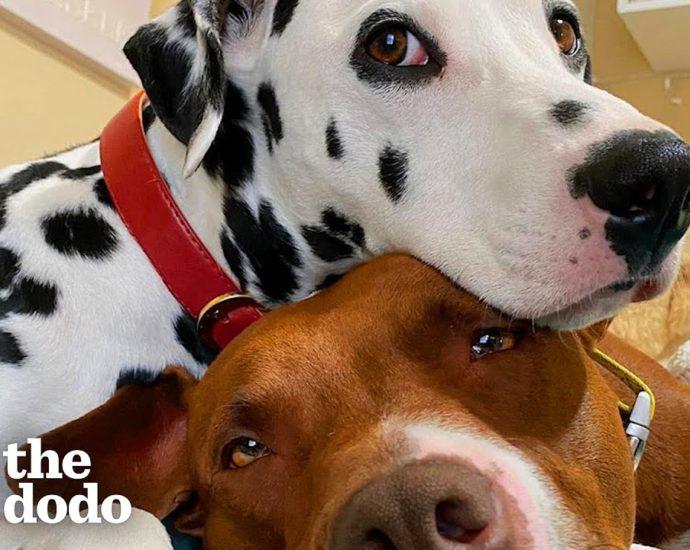 Des amis des chiens obtiennent de leurs parents qu'ils commencent à se fréquenter | The Dodo
