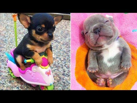 Bébés chiens 🔴 Compilation de vidéos de chiens mignons et drôles #2 | 30 minutes de vidéos drôles de chiots 2021