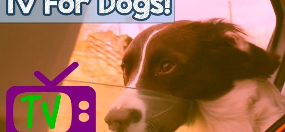 VIDÉOS POUR CHIENS ! Télévision pour chiens, des heures de divertissement pour les chiens et les chiots avec une musique relaxante ! 🐕 📺