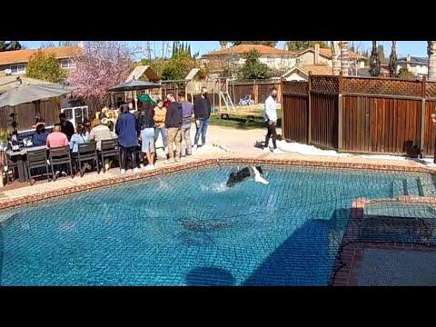 Un chien surprend les gens en courant au-dessus d'une piscine