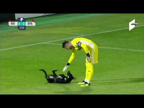 Un chien interrompt un match de football et veut des caresses sur le ventre.