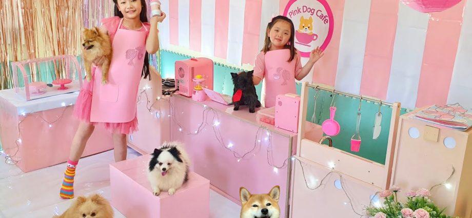 Jouer avec des animaux domestiques à la maison Pink Dog Cafe