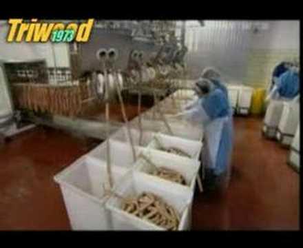 Production en masse de hot-dogs dans une usine