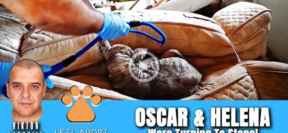 Hope sauve 2 chiens transformés en pierre, trop malades pour bouger - @Viktor Larkhill Extreme Rescue