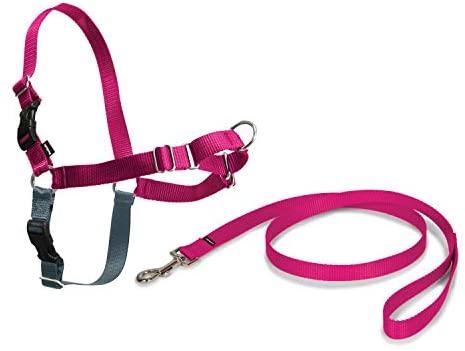 PetSafe Harnais Easy Walk avec boucle Anti-Traction et laisse de 1,8 m, promenade confortable pour vous et lui - 4 points de Réglage – Résistant, facile à mettre et enlever – Framboise, taille M